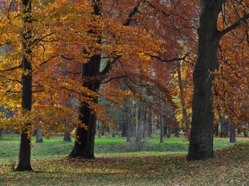Jesień w parku w Opatówku zachwyca bogactwem barw. Fot. D. Buncler