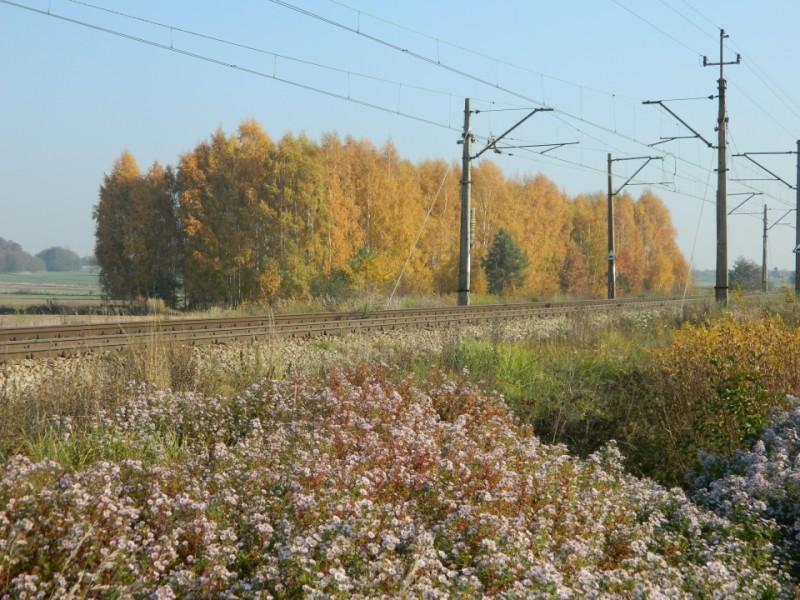 Tory kolejowa w Zawadach