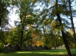 Kozi Park