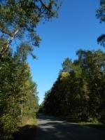 Droga w Borowie
