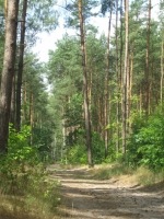Las w Opatówku