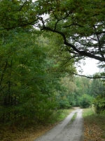 Las w Słonecznej