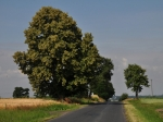 Droga w Warszewie